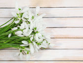Beautiful snowdrops on wooden background — Photo