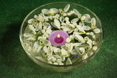 Beautiful snowdrops and candle in glass bowl with water, on green background — Stock Photo