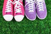 Beautiful gumshoes on green grass background — Foto de Stock