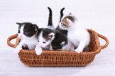 Cute little kittens in wicker basket — Stock Photo