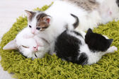 Cute mother cat and little kittens — Stock Photo