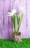 Beautiful tulips in pot  on green grass, on wooden background — Stock Photo