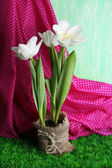 Beautiful tulips on color fabric background — Stock Photo