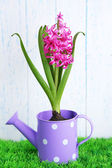 Beautiful hyacinth flower in decorative watering can  on green grass, on wooden background — 图库照片