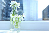 Beautiful bouquets of snowdrops in vases on windowsill — Стоковое фото