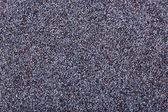 Poppy seeds close-up — Stock Photo