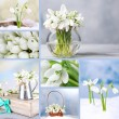 Collage of snowdrops closeup — Stock Photo #43171183