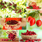 Collage of garden berries — Stock Photo