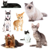 Collage of cats and dogs isolated on white — Stock Photo