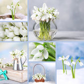 Collage of snowdrops closeup — Stock Photo