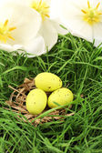 Easter eggs on green grass, close up — Стоковое фото