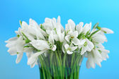 Beautiful snowdrops on bright background — Stock Photo