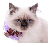 Beautiful cat isolated on white — Stock Photo