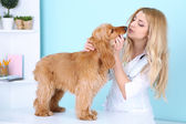 Beautiful young female veterinarian examining dog in clinic — Stock Photo