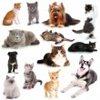 Collage of cats and dogs isolated on white — Stock Photo #43334779