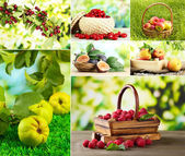 Collage of garden fruits and berries — Stock Photo
