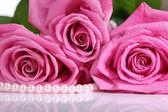 ピンクのバラは白で隔離されます。 — ストック写真
