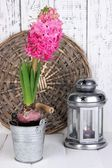 Pink hyacinth in bucket with decorative lantern on table on wooden background — Stock Photo