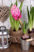 Houseplants in pots with decorative lantern on table on wooden background — Stock Photo