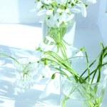 Постер, плакат: Beautiful bouquets of snowdrops in vases on windowsill