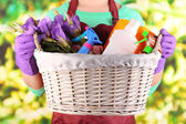 Housewife holding basket with cleaning equipment on bright background. Conceptual photo of spring cleaning.  — Stock Photo