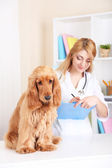 Beautiful young female veterinarian with dog in clinic — Stock Photo