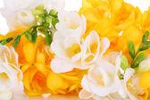 Beautiful freesia flowers, close up — Stock Photo