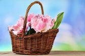 Lindas tulipas em cesta de vime, na mesa de madeira, no fundo brilhante — Fotografia Stock