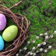 Easter eggs in nest on green grass background — Stock Photo #43597755