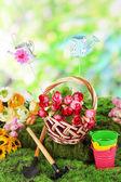 Skład wiosna na trawie naturalnej tle — Zdjęcie stockowe