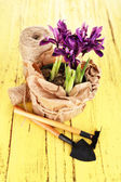 Beautiful irises and gardening tools on wooden table — ストック写真