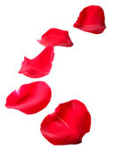 Beautiful red rose petals, isolated on white — Stock Photo
