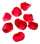 Beautiful red rose petals, isolated on white — Stock fotografie