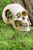 Череп с цветами на фоне зеленой травы — Стоковое фото