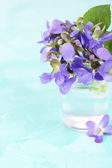 Violets flowers on blue background — Stock Photo