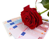 Beautiful rose and money, isolated on white — Stockfoto