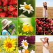 Collage of summer time — Stock Photo #43662829