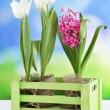 Beautiful tulips and hyacinth flower in wooden box on bright background — Stock Photo