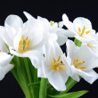 Beautiful bouquet of white tulips isolated on black — Stock Photo