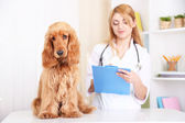 Beautiful young female veterinarian with dog in clinic — Zdjęcie stockowe