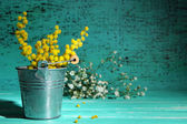 Twigs of mimosa flowers in pail on blue wooden table — Stock Photo