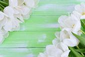 Splendido bouquet di tulipani bianchi su sfondo verde chiaro — Foto Stock