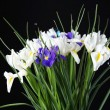 Постер, плакат: Beautiful irises on black background