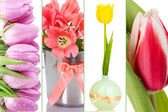 Collage of beautiful tulips — Stock Photo