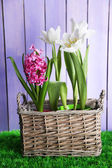 Beautiful tulips in wicker basket, on green grass on color wooden background — Stock Photo