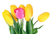 Pink and yellow tulips on bright background — Stock Photo