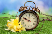 Alarm clock on green grass, on nature background — Fotografia Stock