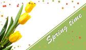 Piękne tulipany na białym tle — Zdjęcie stockowe