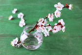 Beautiful apricot blossom in transparent jar on old wooden background — Stock Photo