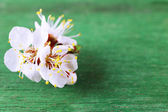 Beautiful apricot blossom on old wooden background — Stock Photo